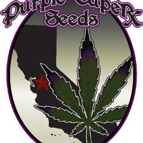 Candy Purple x Snow White Flowers Logo