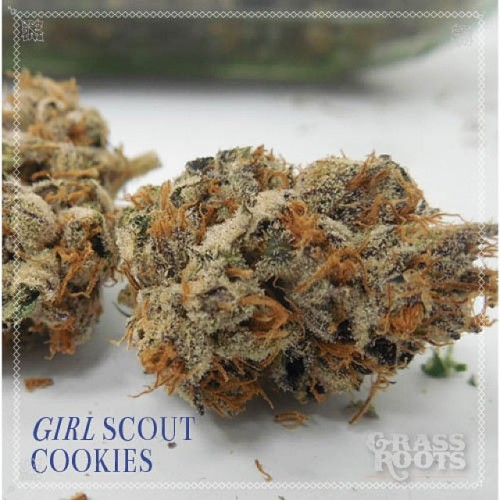 Girl Scout Cookies Wax Logo