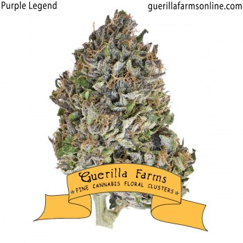 Purple Legend
