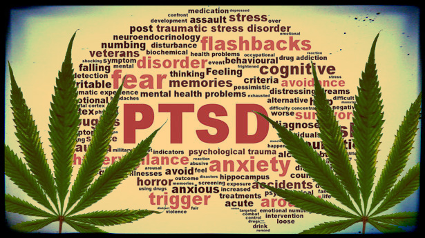 States Are Beginning to Consider Cannabis Therapy for PTSD