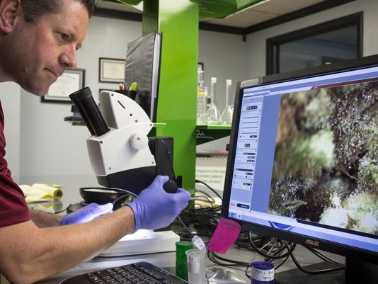 Microscopes Can Reveal Mold and Other Contaminants