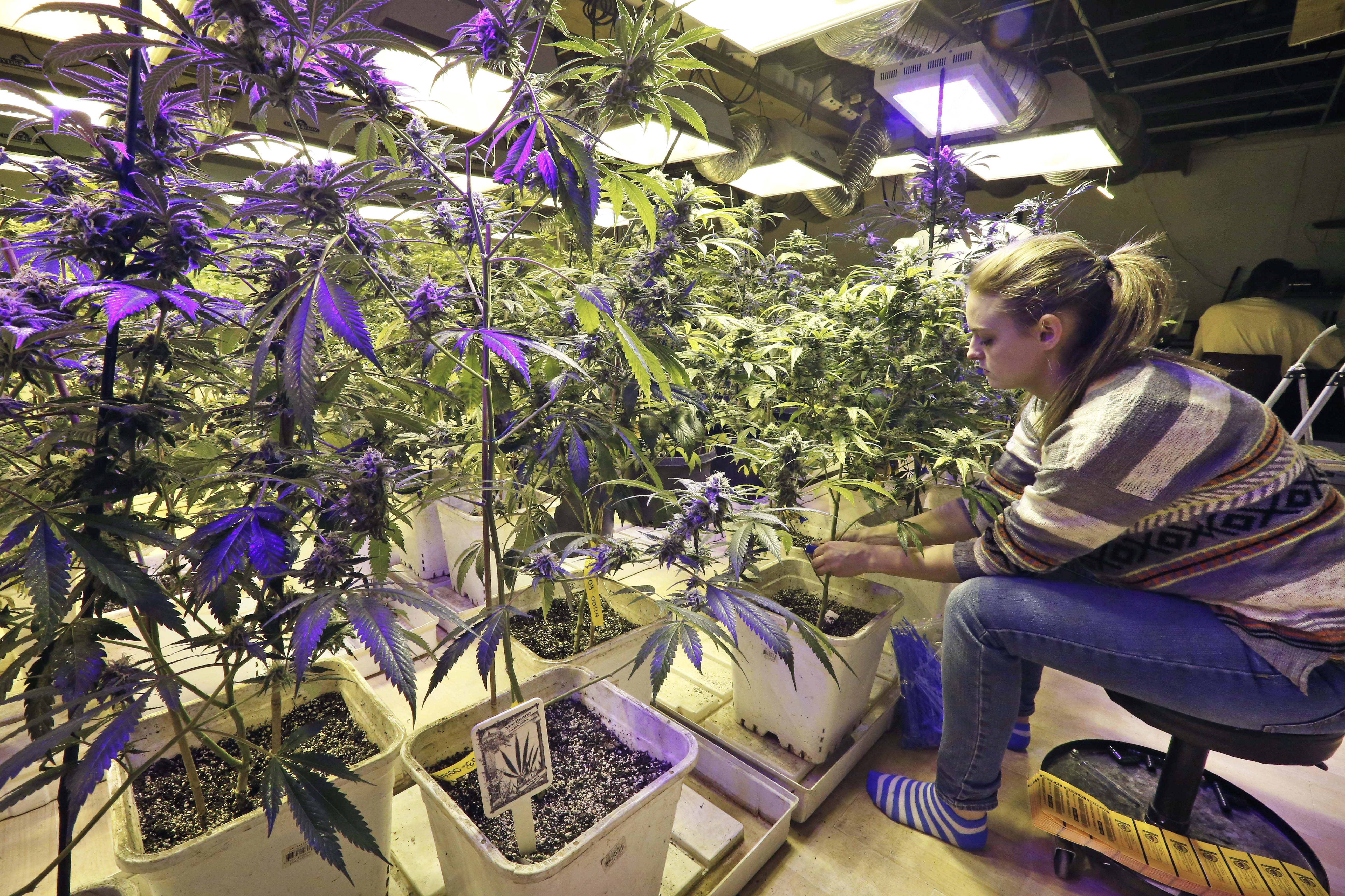 the legalization of marjuana An organized big money lobby marijuana legalization and/or liberalization has big money behind it, primarily through a few billionaires who support an array of groups lobbying full time to advocate weaker drug laws.