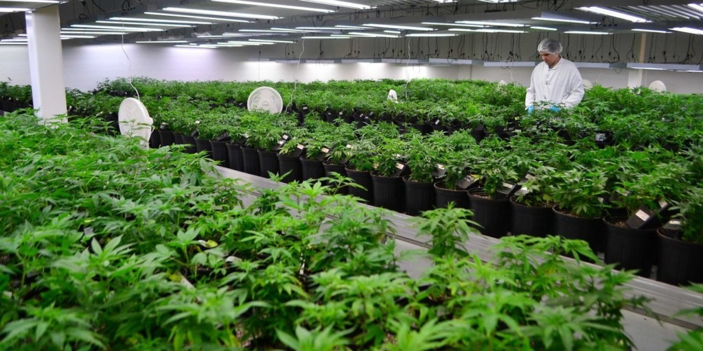 Tweed Inc, One of Canada's Largest Cannabis Producers (source)