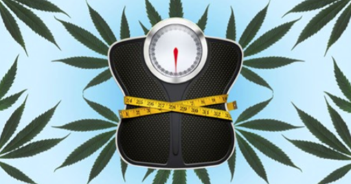 CannabisNowMagazine.com: Weight-loss Strains