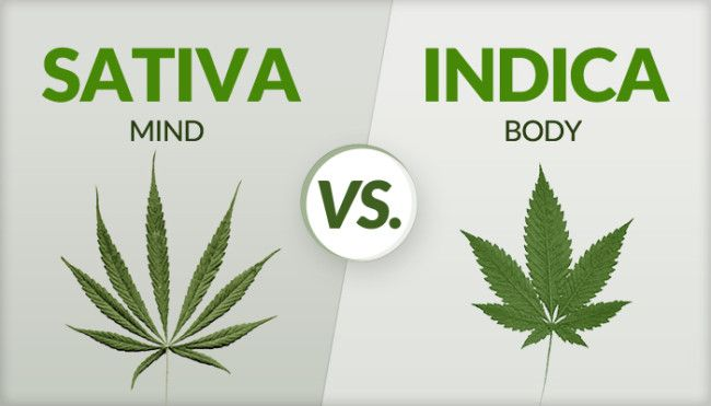 Cannabis is Too Complex of an Organism to Be Defined as a mix of Indica or Sativa.