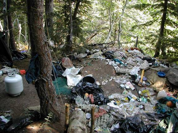 Aftermath of an Illegal Cannabis Farm Discovered by the U.S. Forest Service (source)