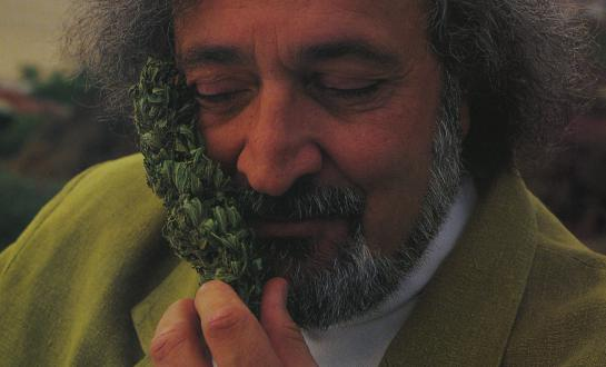 Jack Herer with His Favorite Plant