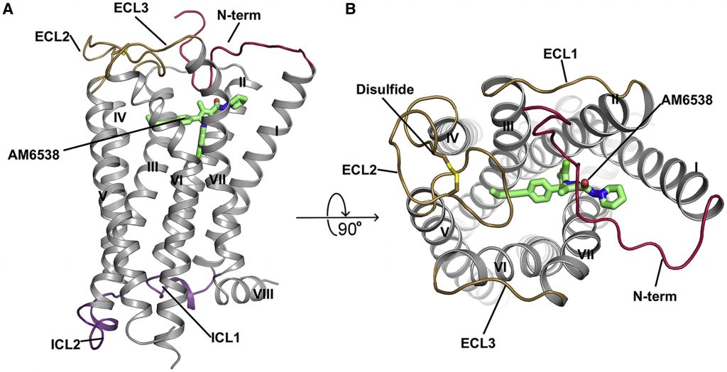 Overall Structure of CB1