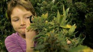 kids-cannabis